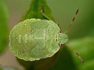 Käfer Im Garten : gr ner k fer schwarz gepunktet foto bild tiere ~ Lizthompson.info Haus und Dekorationen