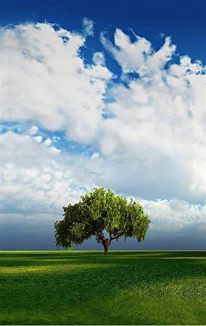 Background Desktop Vertical Portrait Sky Tree Clouds