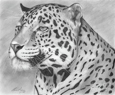 big cat drawing  lena auxier