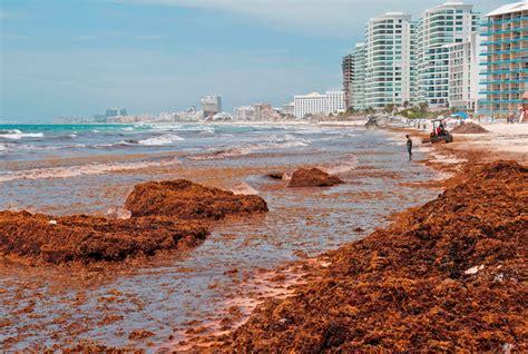 Quintana Roo   Estrategia de gobierno estatal contra ...