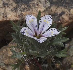 Professor Boardman's Bioblog: Spring in the Mojave Desert