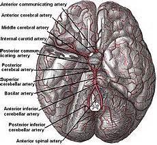 Cerebral hypoxia - Wikipedia, the free encyclopedia Cerebral Hypoxia