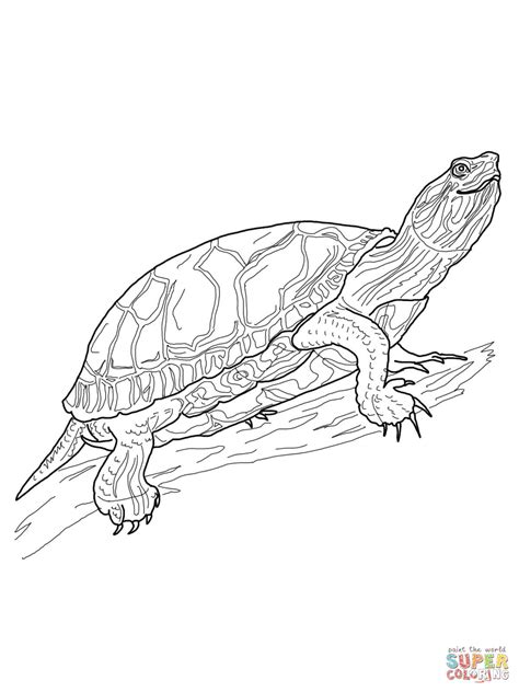 Western Painted Turtle Coloring Page Free Printable