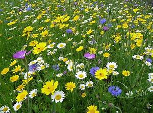 1423 best Wild Flower Meadows images on Pinterest | Nature ...