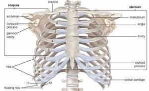 How Do The Bones In My Corset Affect The Bones In My Body