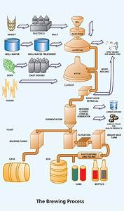 Brewing Process Infographic