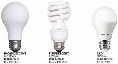 Techbyter Bulbs