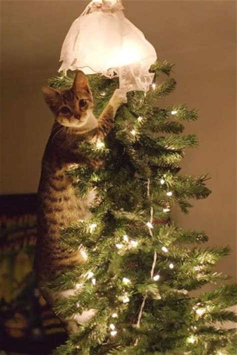 you can have a christmas tree or pets but not both 13 pics