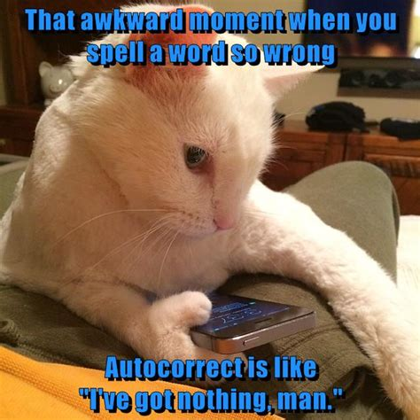 Awkward Cat Meme - that awkward moment lolcats lol cat memes funny cats funny cat pictures with words on