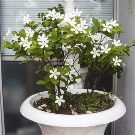plante grimpante d interieur plante grimpante d int 233 rieur liste ooreka