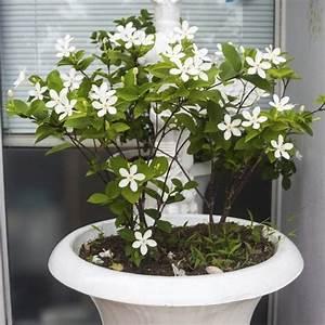 Support Plante Intérieur : plante grimpante d 39 int rieur liste ooreka ~ Teatrodelosmanantiales.com Idées de Décoration