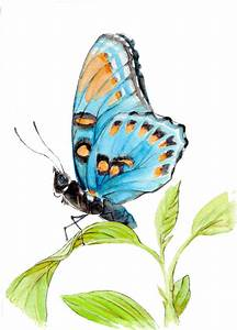 Items similar to Giclee Blue Butterfly Watercolor Painting ...