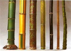 Wie Schnell Wächst Bambus : zimmer und gartenblumen ~ Frokenaadalensverden.com Haus und Dekorationen