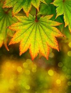 Beautiful, Autumn, Leaves, Pictures, Photos, And, Images, For, Facebook, Tumblr, Pinterest, And, Twitter