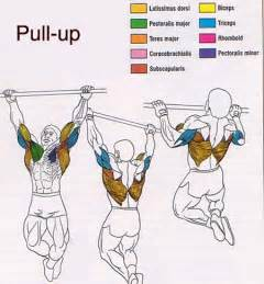 Vertical Bench Crunches by Pull Ups And Chin Ups Marcels Total Fitness Amp Athletics