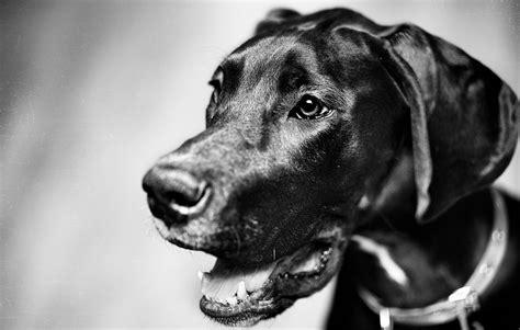 12096 professional photographs of animals photographers 24 7 professional pet photographers