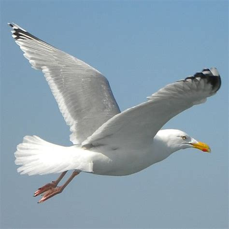 660 Best Images About Seagulls And Other Beach Birds On