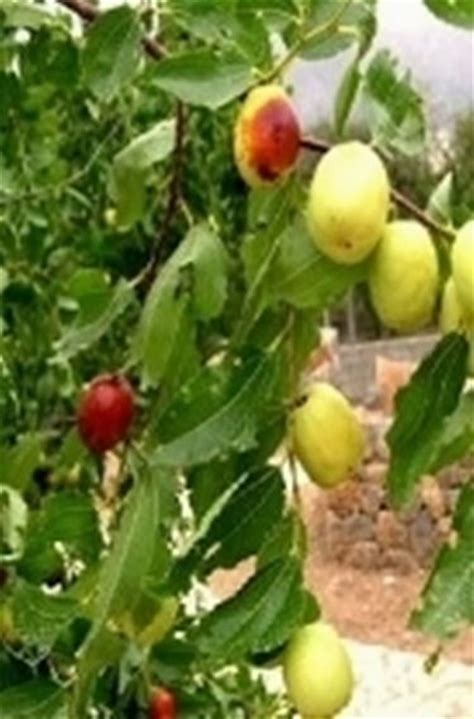 piante da frutto in vaso piante da frutto in vaso domande e risposte orto e frutta