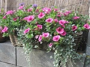 Künstliche Blumen Für Balkonkästen : blumenkasten auf die fensterb nke garten garden ~ A.2002-acura-tl-radio.info Haus und Dekorationen