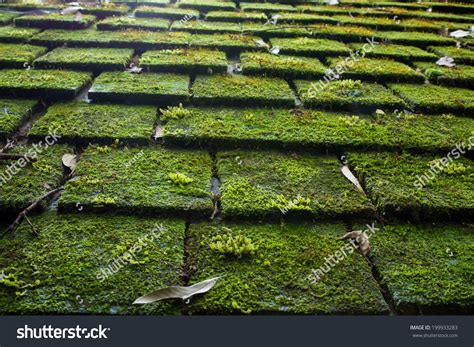 Old Roof Tiles Covered Green Moss Stock Photo 199933283 How Much To Fix Leaking Roof San Antonio Repair Reyes Single Ply Roofing Cleaning Companies Torch Down Leak National Contractors Association Corrugated Polycarbonate Ladder For