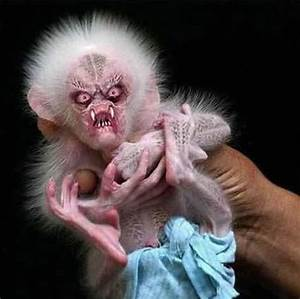 Ugly Monkey - Weird - Funny Pictures, Funny Videos, Cool ...