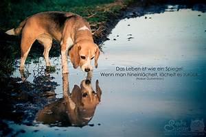 Wie Wird Ein Spiegel Hergestellt : das leben ist wie ein spiegel foto bild tiere haustiere hunde bilder auf fotocommunity ~ Bigdaddyawards.com Haus und Dekorationen