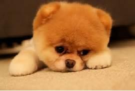 sad puppy edition ...Sad Puppy