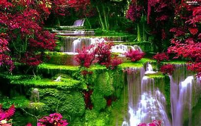 Flowers Waterfall Views Vegetation Wallpapers
