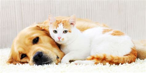 How To Introduce Dogs And Cats?  Inside Dogs World