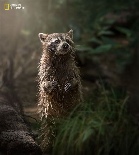 The 2016 National Geographic Nature Photographer Of The