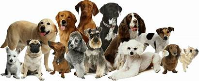 Dog Dogs Different Puppies Types Kinds Names