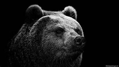 Bear Desktop Wallpapers Wild Backgrounds Entertainment Mobile