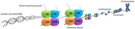 Modification Histone by Histone Modifications What Is Epigenetics