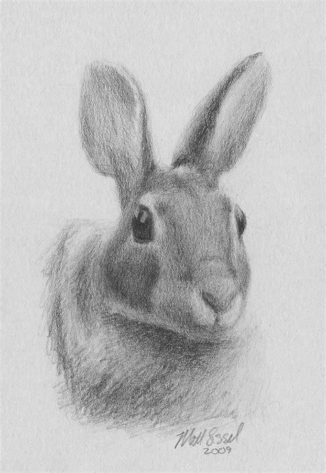 Rabbit Drawing File Drawing Of A Rabbit By Matt Sissel Jpg