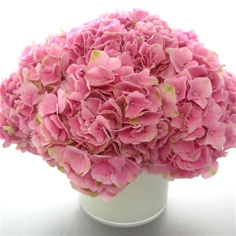 flowers in season flowers in season february bridalguide