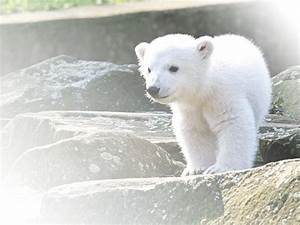 72 best baby animals images on Pinterest | Fluffy pets ...
