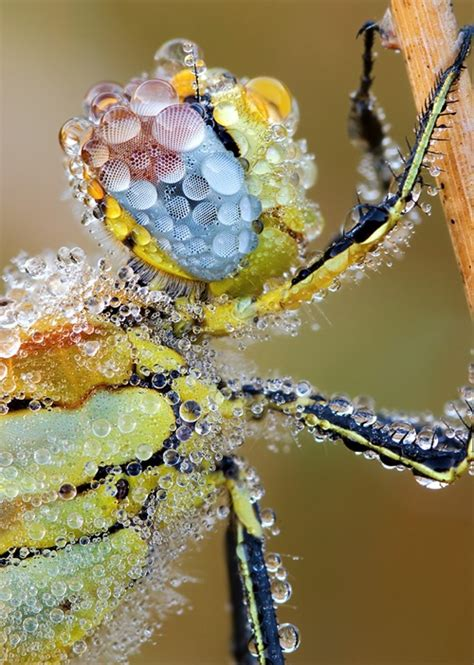 Bejeweled Insects Bestiarum Vocabulum