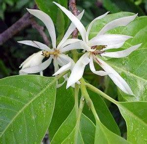 flora  fauna khas provinsi provinsi se indonesia full