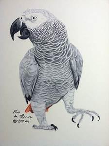 African Grey Parrot Original Artwork Sold By Pio De Lima