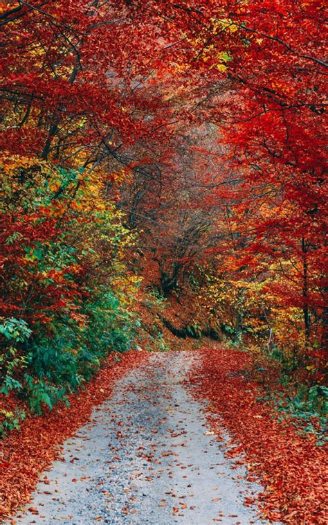 Autumn Hd Wallpapers For Mobile by Colorful Autumn Fall Roadway Free 4k Ultra