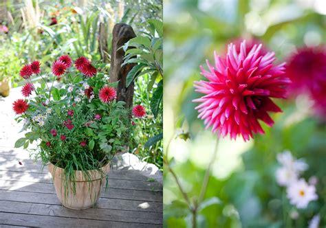 container gardening jason ingram bristol photographer