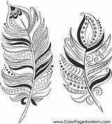 Feathers Coloring Pages Adult Adults sketch template