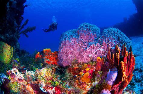 Cozumel Dive Playa Diving Cozumel Diving Bahia Divers