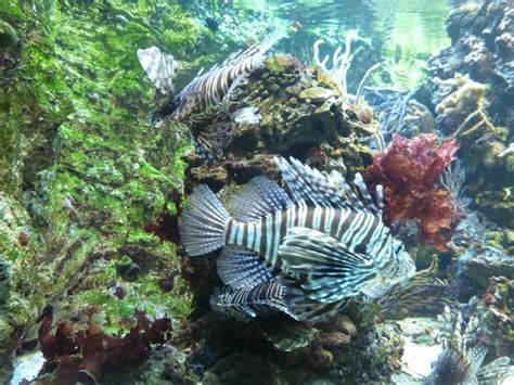 aquarium 5 picture of aquarium tropical de la porte doree tripadvisor