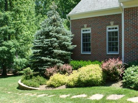 16 Spectacular Good Bushes For Front Of House Lentine