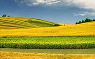 Free Spring Desktop Wallpaper Landscape