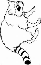 Raccoon Coloring Pages Animals Forest Printable Animal Templates Clipart Printables Template Mario Drawing Crafts Raccoons Clip Colouring Patterns Cliparts Woodland sketch template