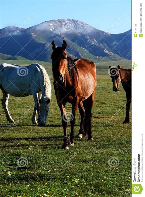 wild asian steppes horse asia wildlife beauty