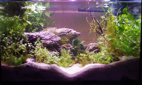 aquarium 70l choix des poissons originaires de plusieurs biotopes