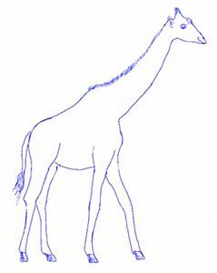 How to Draw a Giraffe - Draw Step by Step - ClipArt Best ...
